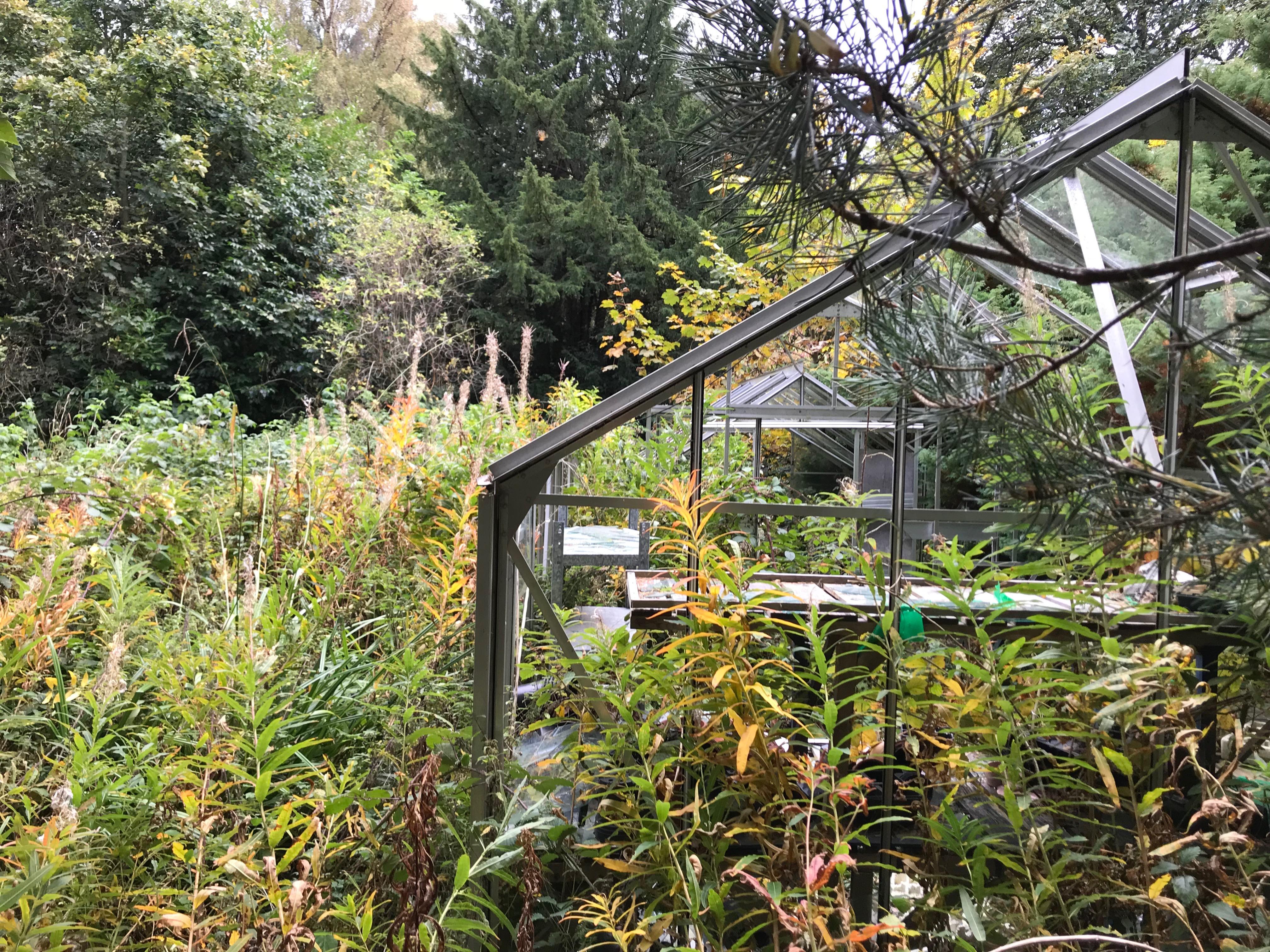Greenhouses in the overgrown, abandoned garden